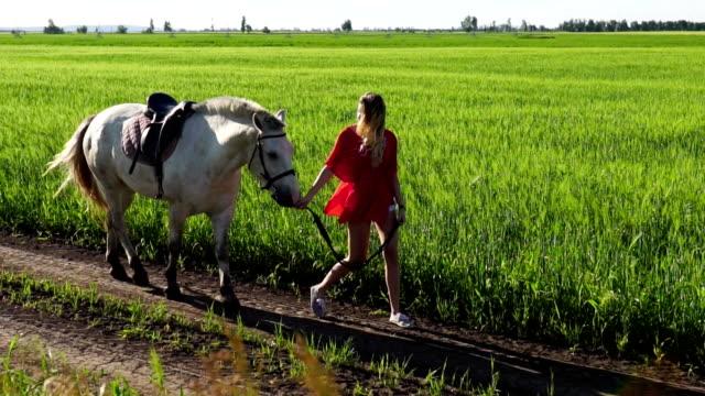 genç güzel kadın kurşun yürüyüş beyazı bir at üstünde yeşil alan ile - uzun adımlarla yürümek stok videoları ve detay görüntü çekimi