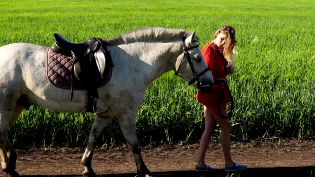 young beautiful woman lead walk with a white horse on the green field - sella video stock e b–roll