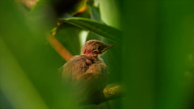 Young bird video