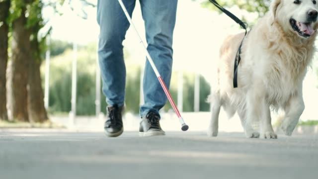 junger blinder mann mit weißem stock und blindenhund, der auf dem bürgersteig in einem park spazieren geht - hundesitter stock-videos und b-roll-filmmaterial