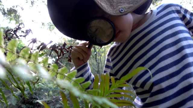Young botanist looking plant magnifying glass