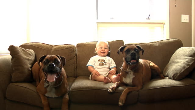 Young boy and dogs sitting on couch video