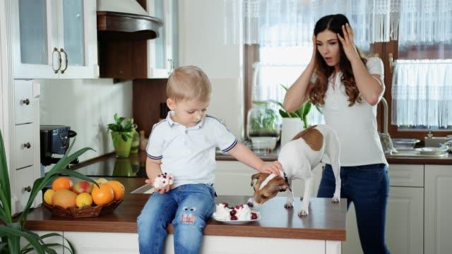 Ein kleiner Junge und sein Hund essen Kuchen – Video