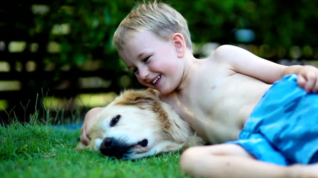 Young boy and his golden retriever in the grass video