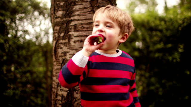 Young Boy Eating Strawberry video