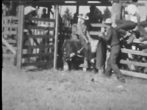 Young boy rides steer at rodeo. From 1930's film