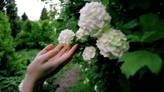 咲く白い花に触れる若いブルネットの少女 - チャームポイント点の映像素材/bロール