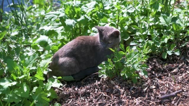 Young cat hides between nettles by a stream