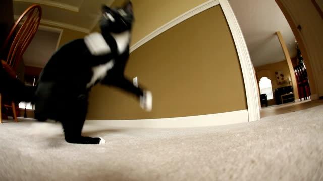 young cat playing with toy - katt inomhus bildbanksvideor och videomaterial från bakom kulisserna