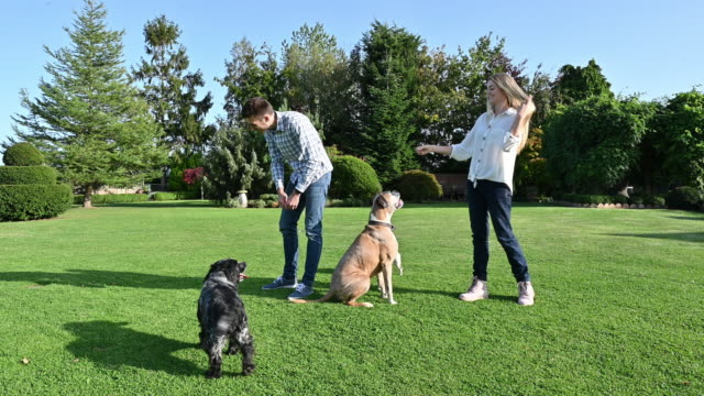 Young Caucasian couple playing outdoors on lawn with dogs