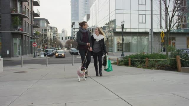 vídeos de stock e filmes b-roll de young caucasian couple walking their dog through the city - passagem de ano