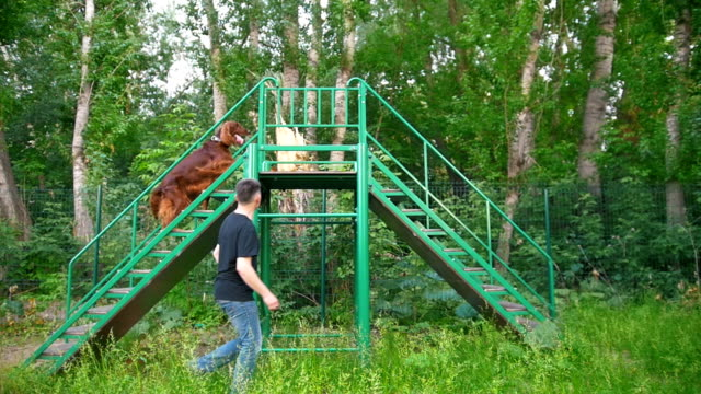 Young caucasian man trains his dog helps to climb the stairs Young caucasian man trains his dog helps to climb the stairs, slow motion irish setter stock videos & royalty-free footage