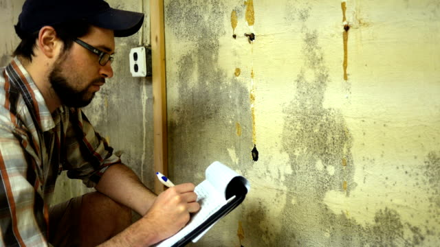 young contractor examines mold on basement wall - basement stock videos & royalty-free footage