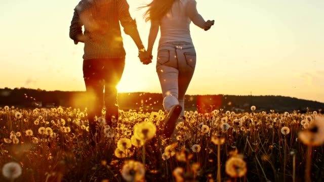 SLO MO Young couple among dandelions at sunset video