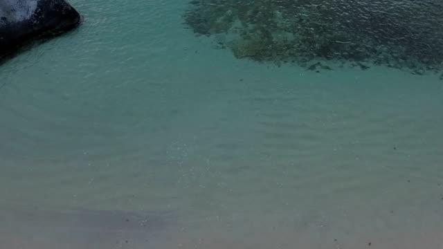 Young couple dancing on a tropical beach, Virgin Gorda video