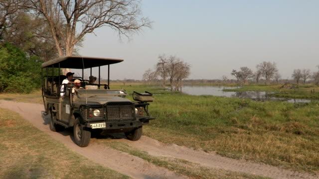 junges paar genießen eine safarifahrt auf safari in botswana - großwild stock-videos und b-roll-filmmaterial