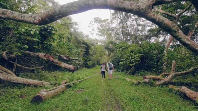 Young couple holding hands and walking in green jungle forest back view. Man and woman walking in rainforest among fallen trees and green tropical plants. Young couple holding hands and walking in green jungle forest back view. Man and woman walking in rainforest among fallen trees and green tropical plants tripping falling stock videos & royalty-free footage