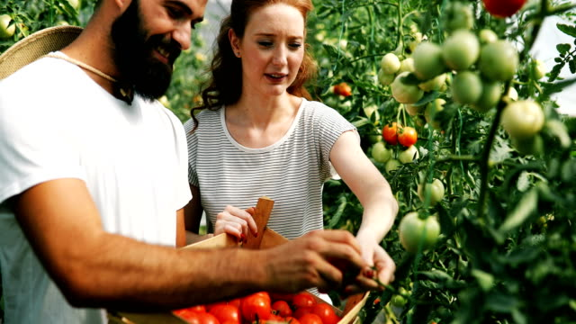 Young couple of farmers working in greenhouse video