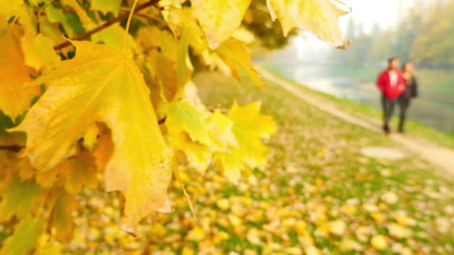 A young couple, out of focus, walking on a sunny day in the nature, it is fall season and the colors are stunning video