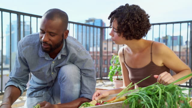 Young couple picking vegetables from their garden video