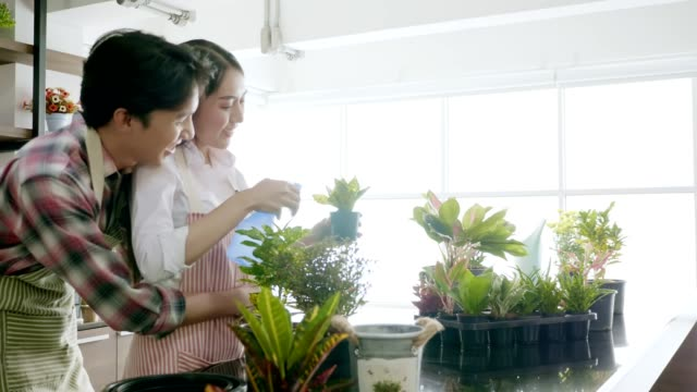 Young couple planting in the flower pots on a counter at home. video