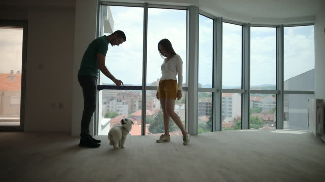 Young couple playing with dog in new apartment video