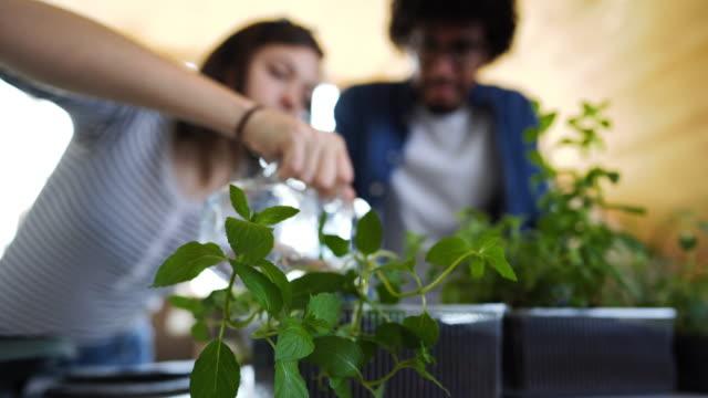 vidéos et rushes de jeunes couples arrosant des herbes dans la cuisine - plante aromatique