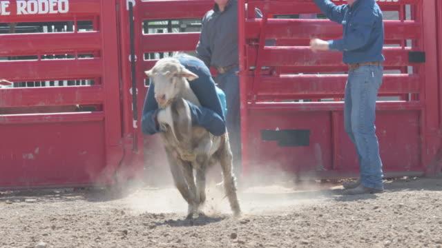 young cowgirl have fun riding a sheep backwards - kowbojka praca związana z ziemią filmów i materiałów b-roll