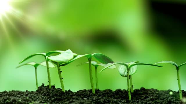 vídeos de stock e filmes b-roll de young cucumber plants germinate under the sun, time lapse, alpha channel - comida sustentavel