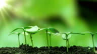 istock Young cucumber plants germinate under the sun, time lapse, alpha channel 1216979069