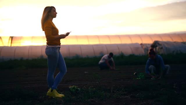 stockvideo's en b-roll-footage met jonge schattige landbouw technicus in een veld - sober leven
