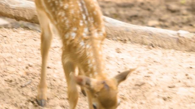 young deer behind a branch - poroże filmów i materiałów b-roll