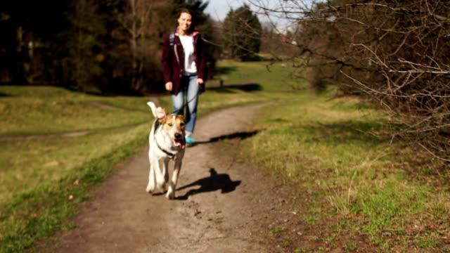 junger hund beißt einen stock mit den zähnen. die gastgeberin und ihr hund laufen im park. hundequarantäne-spaziergang - hundesitter stock-videos und b-roll-filmmaterial