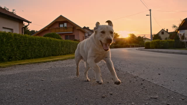 vídeos de stock e filmes b-roll de slo mo jovem cão correr na aldeia - fugir