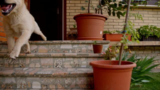 vídeos de stock e filmes b-roll de slo mo jovem cão correr fora de casa - mosaicos flores