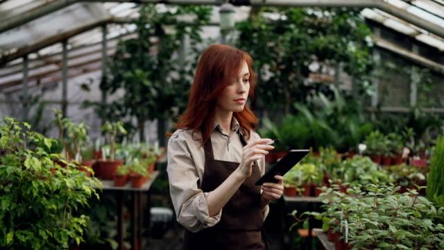 junge unternehmer treibhaus eigentümer tut inventar im gewächshaus pflanzen zählen und eingabe von informationen in tablet. attraktive frau ist beschäftigt check-grün. - gewächshäuser stock-videos und b-roll-filmmaterial