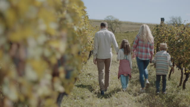 Young family with two children in vineyard video