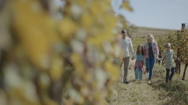 vídeos de stock e filmes b-roll de young family with two children in vineyard - uva shiraz