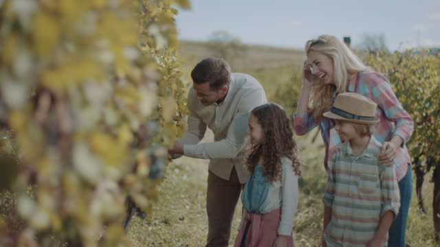 vídeos de stock e filmes b-roll de young family with two children tasting grapes in vineyard - uva shiraz