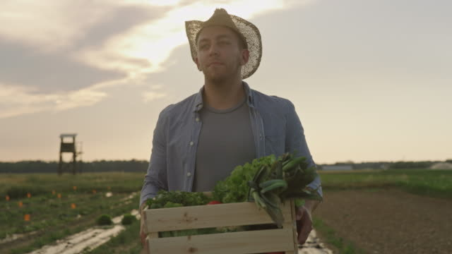 SLO MO Young farmer carries a crate full of vegetables across a field at sunset