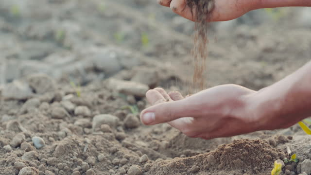 young farmer examining soil. gmo free - gospodarstwo ekologiczne filmów i materiałów b-roll