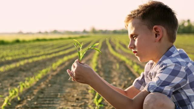 トウモロコシ畑の真ん中に ds 若い農夫 - スロベニア点の映像素材/bロール