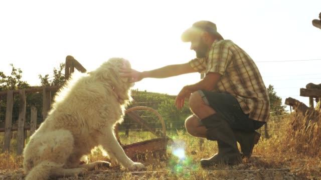 vídeos de stock, filmes e b-roll de jovem agricultor acariciando maremma sheepdog ao pôr do sol em horta. itália. - animais da fazenda