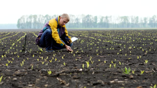 Young Farmer With Digital Tablet Young farmer checking progress of corn fields with digital tablet agricultural occupation stock videos & royalty-free footage
