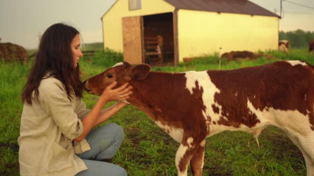 vidéos et rushes de la jeune femme d'agriculteur caresse un veau à une ferme. ranch de campagne en été. - veau