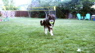 istock A Young Father Helps his Four Year Old Daughter Throw a Ball so Their Border Collie Dog can Fetch it In Their Back Yard 1227761399