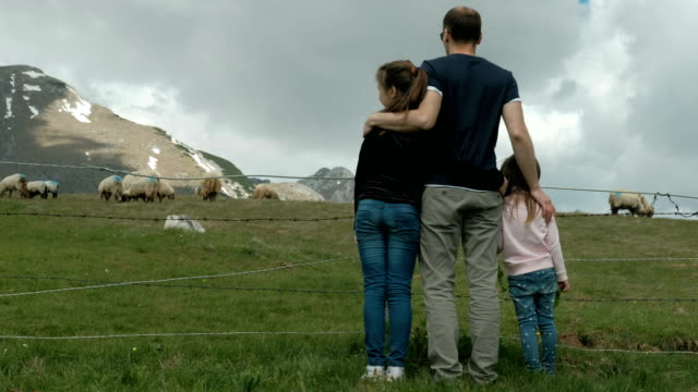Young father with daughters looks at grazing sheep on farm outdoors video