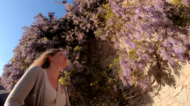 Young female cyclist passes wisteria blossoms at sunrise She smells the blossom perfume less than 10 seconds stock videos & royalty-free footage