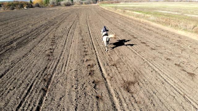 vídeos de stock, filmes e b-roll de cavalo de equitação equestre fêmea novo pelo campo arado ao longo do campo rural. cavaleiro no horseback que atravessa o montanhês verde. vista traseira aérea. - cavalgar