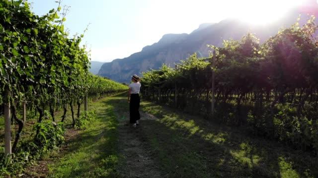 vídeos de stock e filmes b-roll de young female farmer checking vineyard plantation walking near grapes in green valley during summer season - grapes